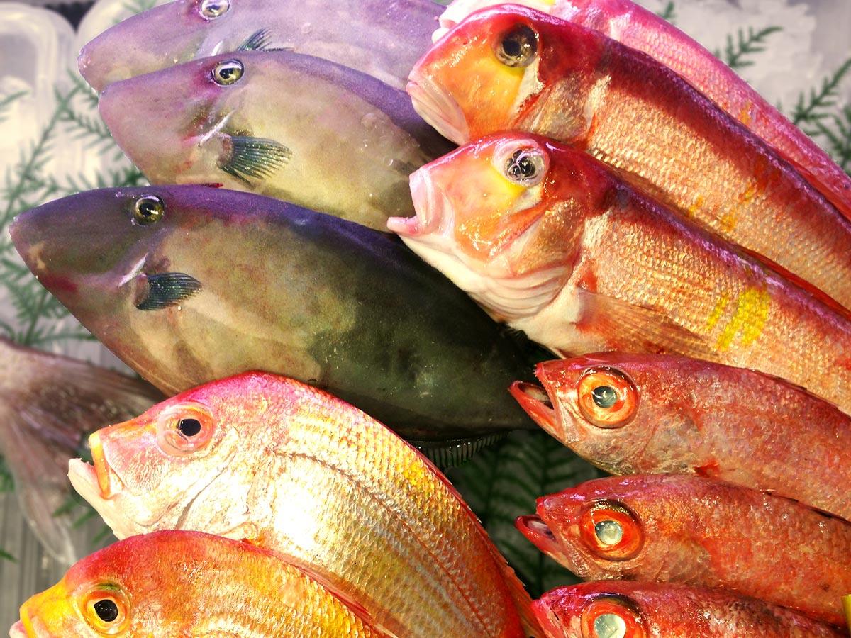 和歌山県の海は魚介の宝庫。 黒潮が育んだとれたて旬の海産物を紹介します。